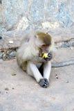 Mono que come un plátano Foto de archivo libre de regalías