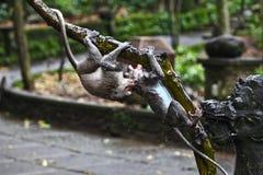 Mono que cuelga en árbol Foto de archivo
