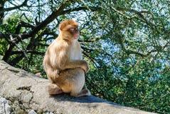 Mono que cuenta con la comida Fotos de archivo