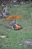 Mono que lo come comida fotografía de archivo