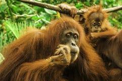 Mono que parece bueno Foto de archivo libre de regalías