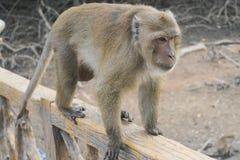 Mono que recorre Imagen de archivo