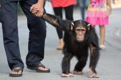Mono que recorre Foto de archivo