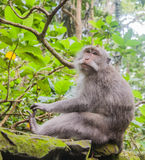 Mono que se sienta Imagen de archivo