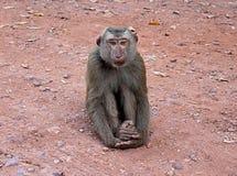 Mono que se sienta Foto de archivo