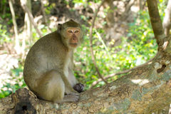 Mono que se sienta en árbol Imagenes de archivo