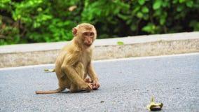 Mono que se sienta en el camino almacen de video