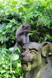 Mono que se sienta en la estatua de piedra Fotos de archivo