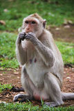Mono que se sienta en la hierba; Fotografía de archivo