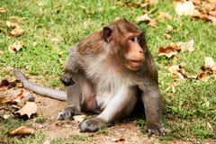 Mono que se sienta en la hierba Fotos de archivo