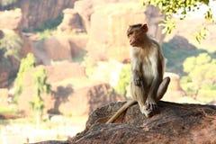 Mono que se sienta en la roca Imágenes de archivo libres de regalías