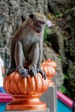 Mono que se sienta en las escaleras, cuevas de Batu, Kuala Lumpur, Malasia imagenes de archivo