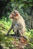 Mono que se sienta en roca fotografía de archivo