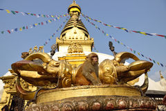 Mono que se sienta en stupa del swayambhunath en Katmandu, Nepal Imagenes de archivo