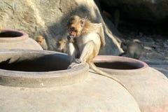Mono que se sienta en un florero Fotos de archivo