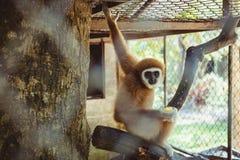 Mono que se sienta en un parque zoológico de la jaula Foto de archivo libre de regalías