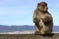 Mono que se sienta en una cerca de piedra Fotos de archivo libres de regalías