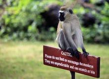 Mono que se sienta en una muestra de madera Fotografía de archivo