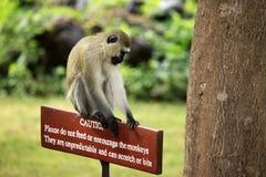 Mono que se sienta en una muestra de madera Imagen de archivo