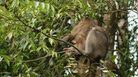 Mono que se sienta en una ramificaci?n almacen de metraje de vídeo
