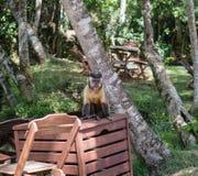 Mono que se sienta encima de una caja de madera Fotos de archivo