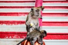 Mono que sostiene la comida Imágenes de archivo libres de regalías