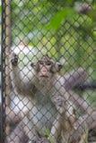 Mono que sube en la jaula Fotos de archivo libres de regalías