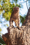 Mono salvaje Fotografía de archivo libre de regalías