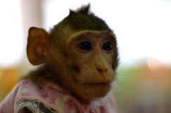 Mono salvaje cerrado en una jaula Imagen de archivo