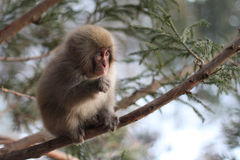 Mono salvaje del bebé Imagenes de archivo