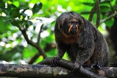 Mono sorprendido antes de su comida Imágenes de archivo libres de regalías