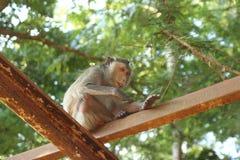 Mono tailandés Fotografía de archivo