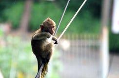 Mono Tailandia fotografía de archivo