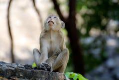 Mono Tailandia foto de archivo libre de regalías