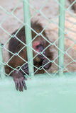 Mono triste capturado en un parque zoológico Imagen de archivo