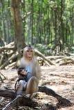 Mono y bebé Fotos de archivo