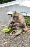 Mono y bebé Foto de archivo