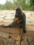 Mono y bebé de la madre Imagen de archivo libre de regalías