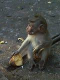 Mono y comida Fotografía de archivo