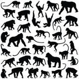Mono y mono libre illustration