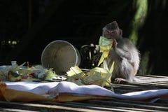 Mono y ofrendas Fotografía de archivo libre de regalías