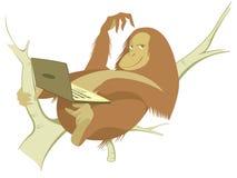 Mono y ordenador Imágenes de archivo libres de regalías