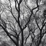 Monochome träd Fotografering för Bildbyråer