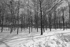 Monochome träd i snön Arkivfoton