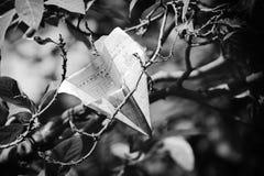 monochrom Fotografia Royalty Free