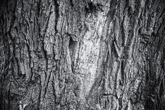 Monochrom barkentyna stary dębowy drzewo, abstrakcjonistyczny natury tło Zdjęcie Stock