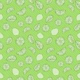 Monochrom zieleni cytrusa ręka rysująca owoc na kroplach wektor bezszwowy wzoru ilustracja wektor