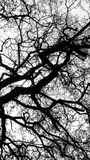 Monochromatic abstract view of a barren tree royalty free stock photos