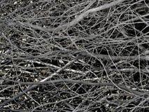 Monochromatic suszy gałąź scenę Obraz Stock