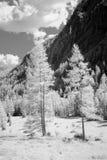 Monochromatic Trees Royalty Free Stock Photography
